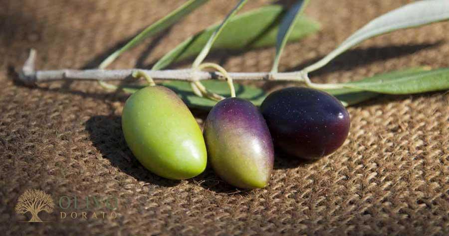 Die Reifegrade von Oliven